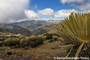 High Andes in Venezuela by torreoso