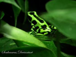 Little Green Frog by SoulCanvas