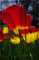 Glow -- Red Yellow 3 by MuseSusan