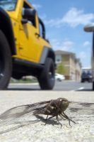 Dragonfly In The Parkinglot by LDFranklin