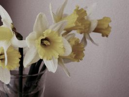 pure forms: daffodils in a glass by snusmumrikenn