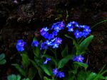 Forget Me Nots by Michawolf13