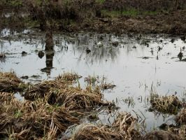 Free Stock Photo - Swampy Landscape #1 by croicroga