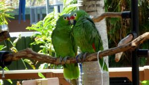 Parrots in love by go4music