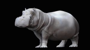 Hippo04 by JBVendamme