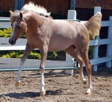 horse stock 4 by Jumper4Jesus88