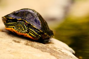 Turttle by DylanStricker