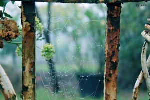 Spider's web by By-who-photography