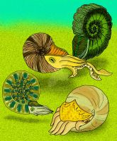 Triassic Nevadan Ammonites by avancna