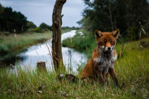 Foxes 1 by DarkDeltaPhoto