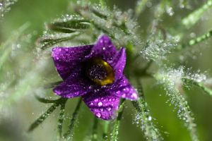 After the Rain II by sudd