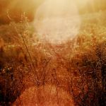 ...Nothing like the Sun by Coffea