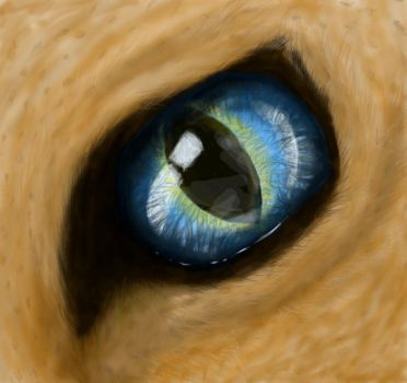 Eye Of The Cat by Yumi555