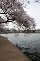 Cherry Blossom Festival 046 by FairieGoodMother