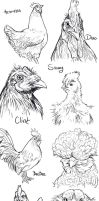Chicken Sketches by Nambroth