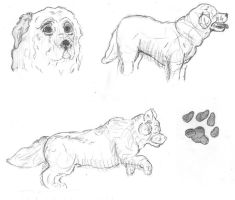 Dog Sketches by caitiedidd