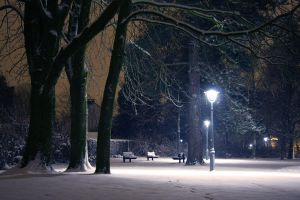 trees and lights in snow by rollarius55