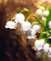 Lily of the Valley by TheDraperyFa11s