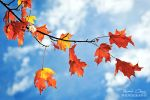 .:Autumn Leaves:. by RHCheng