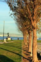 Trees at McCovey Cove by blackhoodielove