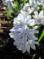 blue and white flowers by Nipntuck3