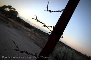 Barbed Wire - by TanyaMarieReeves