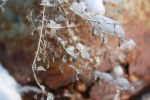 Winter Frost Crystals by Queen-M2