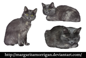 gray cat by Margaritamorrigan
