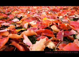 Fall by Jshei
