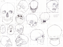Skull Studies by pinatas