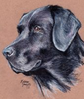 Black Lab by KristynJanelle