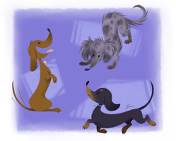 Doxie Doodles by ninibleh