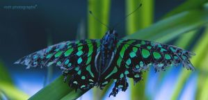 Psychedelic Butterfly by MSH-Photography