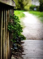 Chemin de nature by k-simir