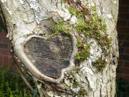 Heart of a Tree II by xdarkmemoriesx