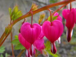 Two natural hearts by Roji-Hachi