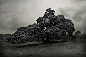 The Tree Beneath The Clouds by Estruda