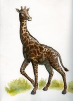 Giraffe by Ezekiel-Black