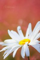 Summer's color III by do0dz
