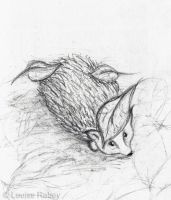 Day 6 - Hedgehog sketch by louise-rabey