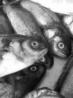 Photo of fishes by Maleiva