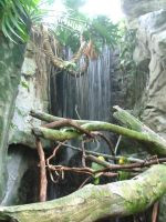 Rainforest - waterfall by twilight-stock