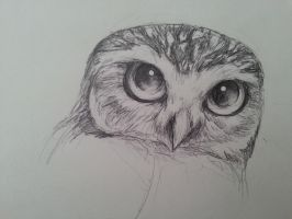 Burrowing Owl by Creeate97