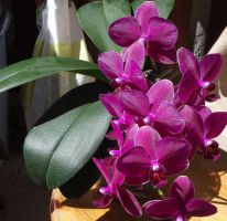 Orchids in the sun by Adagem