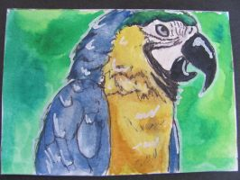 parrot atc by nupharHALL