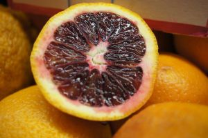 Blood Orange Stock by terrestri-stockz