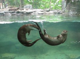 North American River Otters by AnimalsRForever