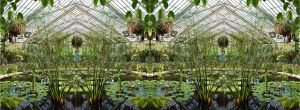 Kew Gardens Victoria Lily House Papyrus Experience by aegiandyad
