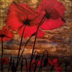 poppies 2 by Tomelu