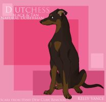 Dutchess the Doberman by eternal-dream